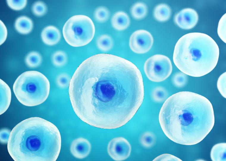 NK免疫细胞疗法