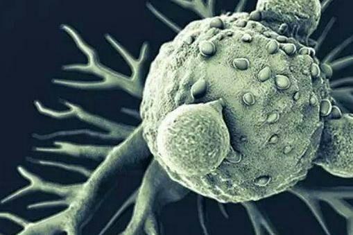 生物细胞治疗费用?首选李非博士指导