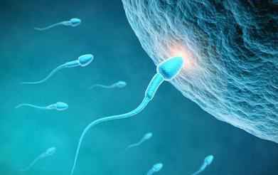 无精症福音干细胞新进展
