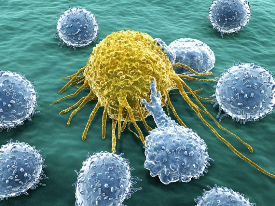 免疫疗法适合哪些癌症